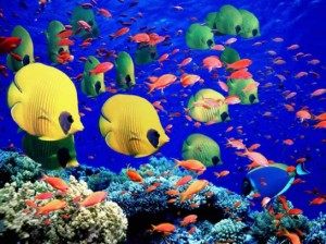 Great-Barrier-Reef-Holiday-Reef-Fish-545x408