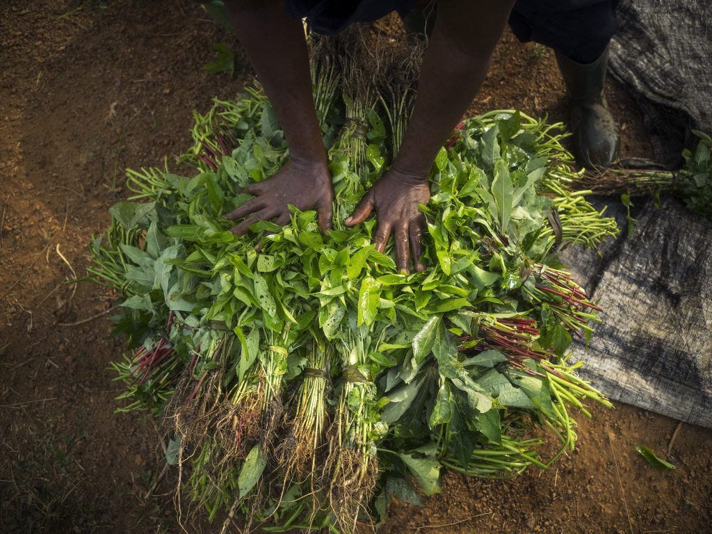 Satta Momo and her harvest. Satta Momo, 35 years old, grows and sells greens and vegetables in Pipeline Market, Pipeline community, Paynesville, Liberia.