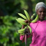 Emergency Appeal - Plantain Farmer in Sierra Leone
